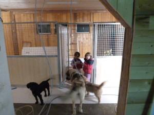 Ausbau Hundestation