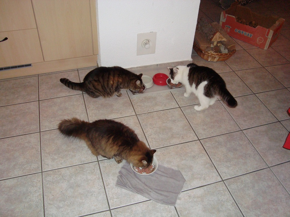 Jimmy, Masha und Wanda