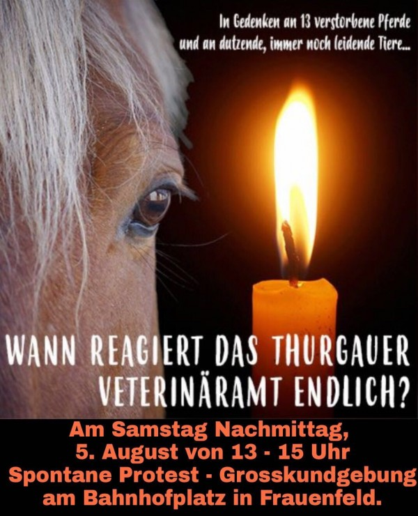 Pferde leiden