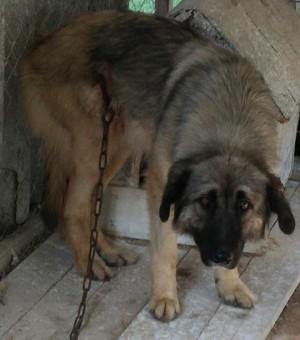 gerettete Hunde